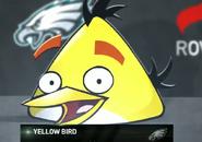 Philadelphia Eagles Yellow