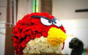 Angry birds flowers