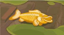 Golden-Koi-Fish