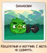 Сильносвин-1