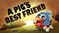 APig'sBestFriend
