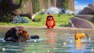 Angrybirdsmovie sony c