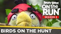 Birds On The Hunt