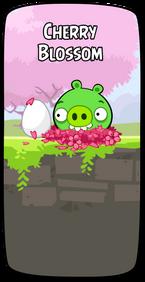 Cherry Blossom New