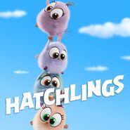 AB Hatchlings