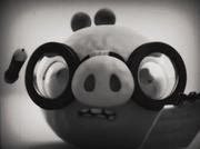 Свин в очках