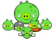 Pigs team