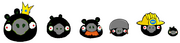 Zombie Black Pigs
