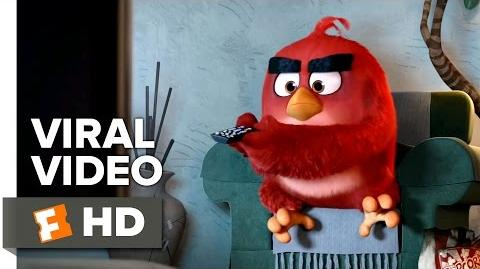 The Angry Birds Movie VIRAL VIDEO - AMC Video (2016) - Animated Movie HD