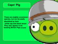 CapnPigInfo