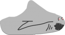 Shark Ship
