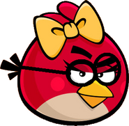 Female Goggle Bird