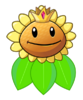 Queen Sunflower
