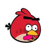 Dum bird