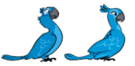 Rio Birds