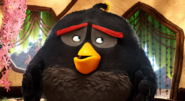 The Angry Birds Movie - Bomb