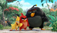 Angry Birds High Res