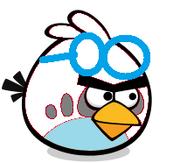 White Goggle Bird