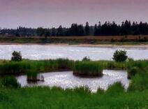 Lakeofshiningwaters