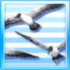 Flying Colony Of Seagulls Type 2
