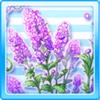 Purple Flowers Of Summer