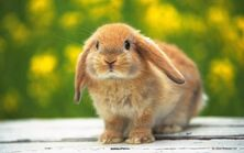 Bunnies-bunny-rabbits-16437969-1280-800