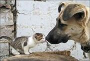 Cat kiss dog