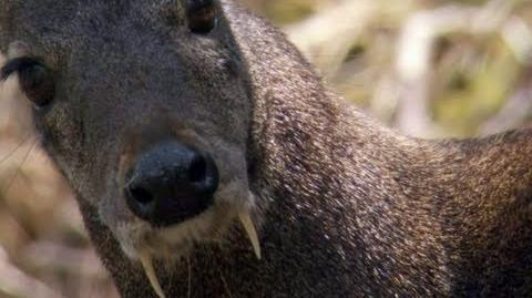 Vampire Kangaroo Deer