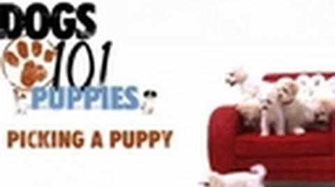 Dogs 101 - Picking a Puppy