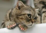 Don't Declaw