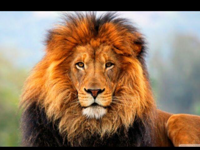 File:The lion.jpg