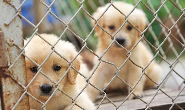 File:Animal-shelter.jpg