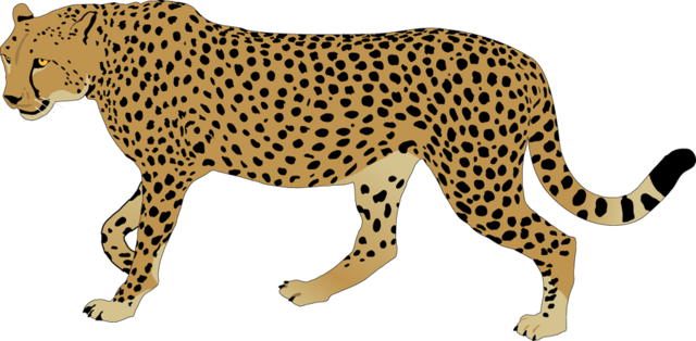 image cheetah clipart cheetah clip art png animal jam animal rh animal jam animal groups wikia com cheetah clipart black and white cheetah clipart face