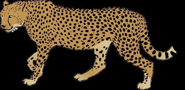 image cheetah clipart cheetah clip art png animal jam animal rh animal jam animal groups wikia com cheetah clipart face cheetah clip art images