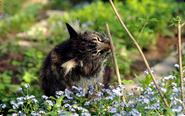 Pond Medicine Cat Image