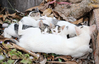 Shelter-intake a-closer-look-at-community-cats body1-right