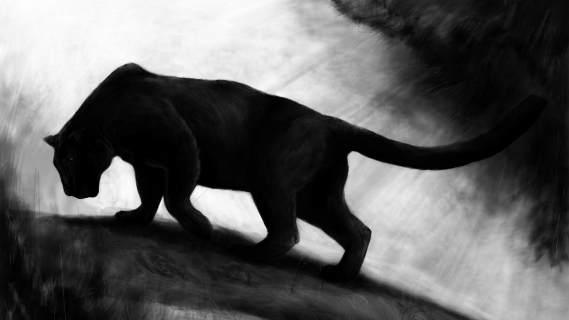 Black Tiger Hd Pics - Best Image of Tiger 2018