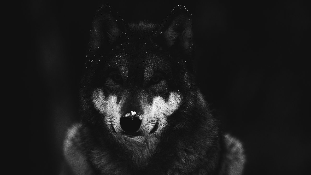 dark wallpaper