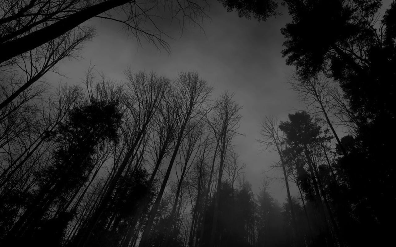 Tumblr Static Black And White Backgrounds Tumblrtumblr Forest Dark Wallpaper Wallpines Tzx1mqky