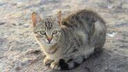 Lakeclan medicine cat apprentice