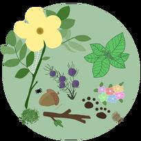 Herbal Guide Image