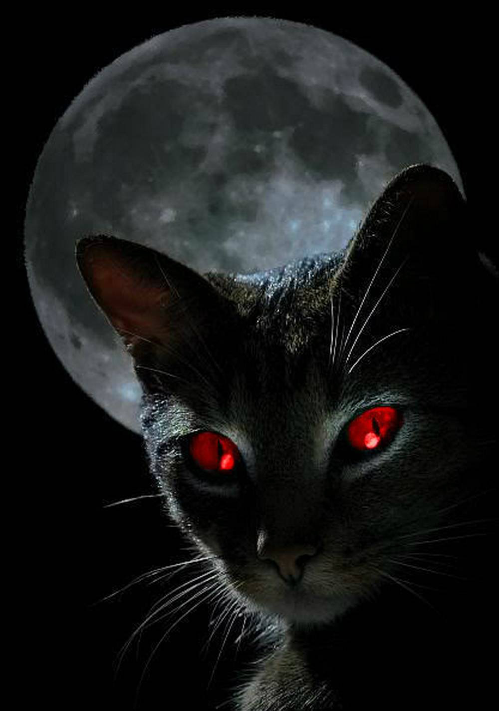 image - black-cat-with-red-eyes-horror-wallpaper | animal jam