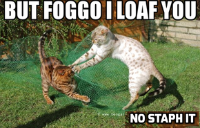 Foggo and Draggo