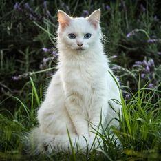 Medicine Cat ApprenticeNat