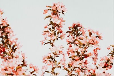 Pinkflowers121