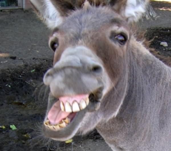 """Résultat de recherche d ´images pour """"smiling donkey"""""""