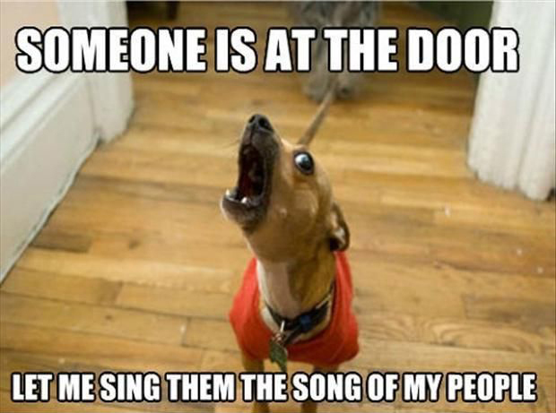 Funny Meme Song : Image someone is at the door let me sing the song of my people