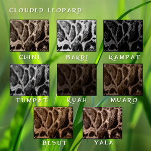 Image clouded leopard fur animal jam clans - Chat type leopard ...