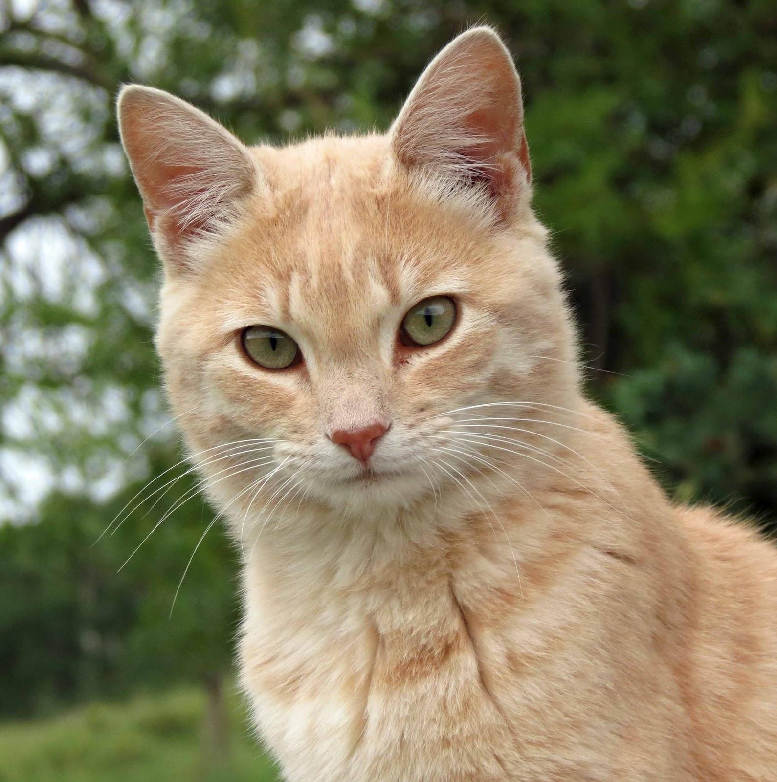 user blog blackwingcat warrior cats character oc s animal jam