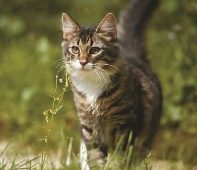 ForWeb Cat in field